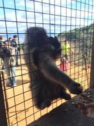 Feeding the monkey's!