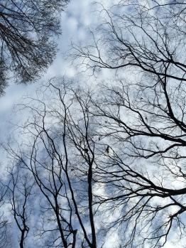 Crows in Yoyogi Park